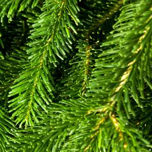 Fragrance:  Green Pine