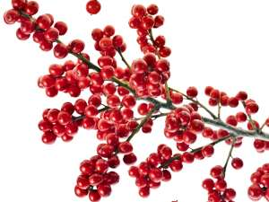 Buds & Berries  Fragrance Oil