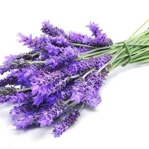 Fragrance:  Lavender