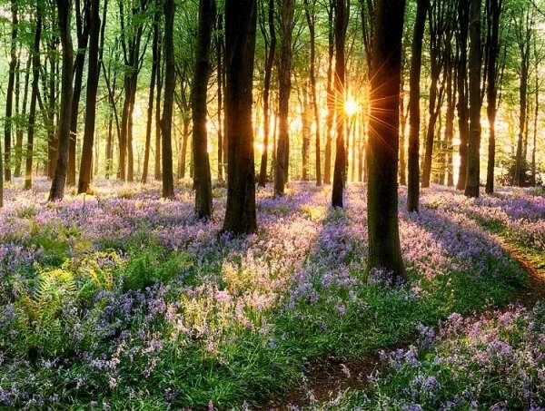 Sweet Woods  Fragrance Oil